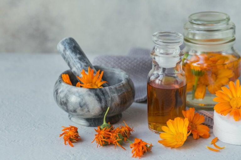 ¿Cómo preparar aceite de caléndula en casa? Usos y beneficios