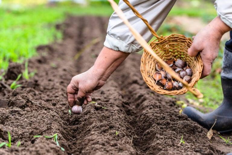 9 verduras para sembrar en octubre